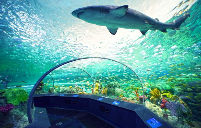Families can sleep beneath the sea life at the  new Ripley's Aquarium of Canada.