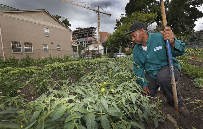 David Lewis, 59, of High Street, weeds a garden on Maple Street in Buffalo's Fruit Belt that he has spent years tending. Meanwhile, a crane on the burgeoning Buffalo Niagara Medical Campus is indicative of how fast the area is changing.