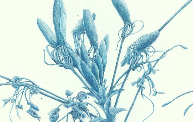 """""""Blue Weed,"""" a 2010 ink-on-paper drawing by Joan Linder, is on view in Nina Freudenheim Gallery's exhibition """"Joan Linder: Ground."""""""