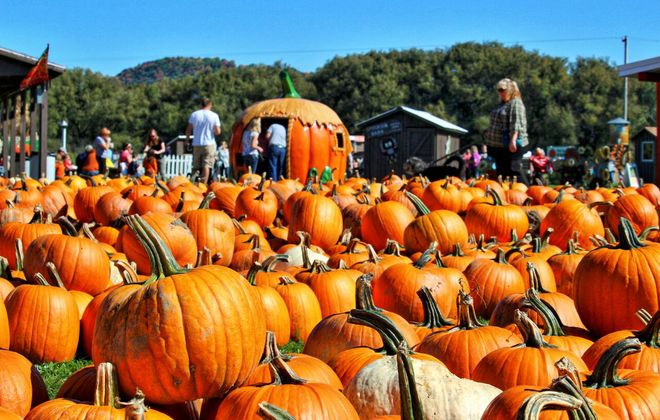 Head to a pumpkin patch and enjoy fall activities.