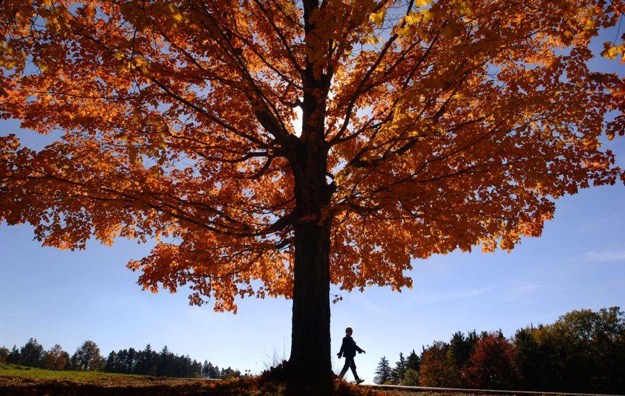 Chestnut Ridge Park in Orchard Park during the fall (Derek Gee/Buffalo News).