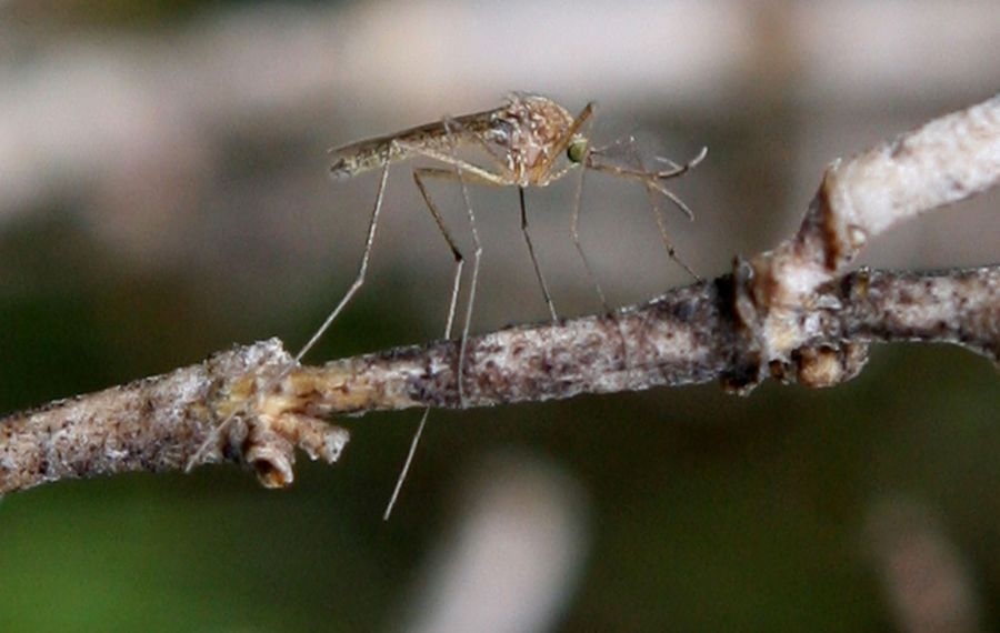 One benefit of the drought? Fewer mosquito bites