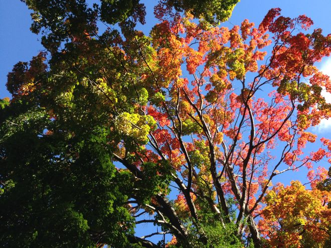 The colors will be changing in the next few weeks across the Buffalo Niagara region. This photo was taken in the Southtowns last October. (T.J. Pignataro/Buffalo News)