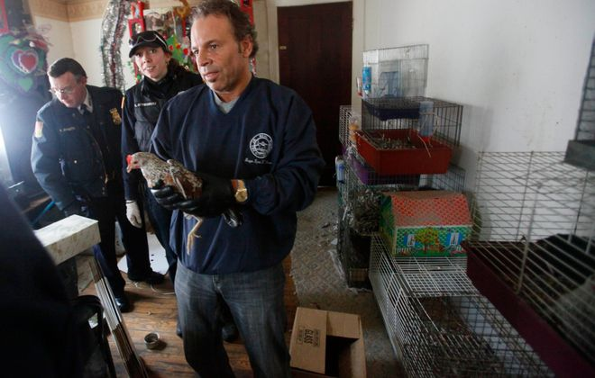 Robert Licata, supervisor of pest control/wildlife for the City of Buffalo, holds a chicken while officials remove some of the 150 animals from a small apartment on Duerstein Street in South Buffalo in 2009. (Derek Gee/Buffalo News)