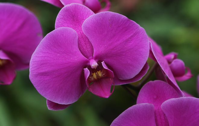 The Fall Orchid Show at the Buffalo and Erie County Botanical Gardens will feature orchid displays, growing demonstrations and vendors. (News file photo).