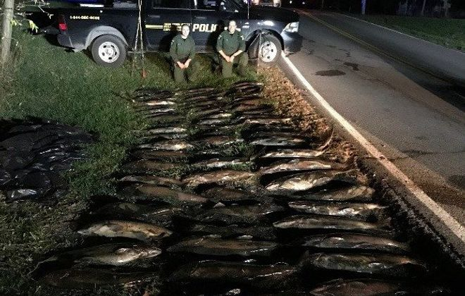DEC Police officers seized nearly 70 salmon snagged illegally by three men early Wednesday morning from Eighteen Mile Creek in Newfane. (NYS Department of Environmental Conservation Police photo)