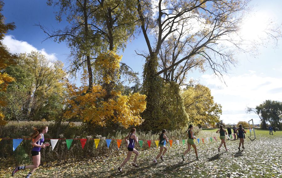 Runners move along during the 2016 Section VI Cross Country track meet at Beaver Island State Park in Grand Island on Nov. 4, 2016.  (Robert Kirkham/Buffalo News)