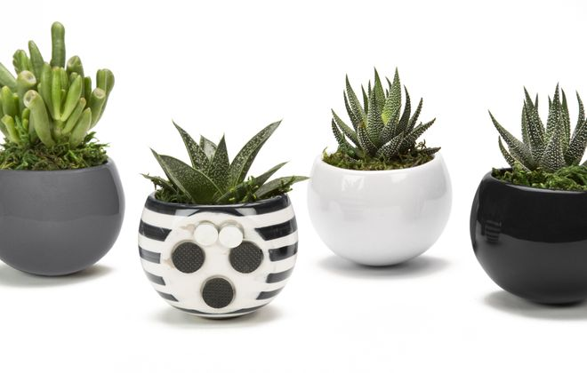 Succulents potted in Classic Magnets containers offer a sleek look to the home. Photo from Live Trends Design.