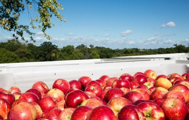 New apple variety Pazazz, shown here, will be available in Western New York while supplies last. (Contributed photo)
