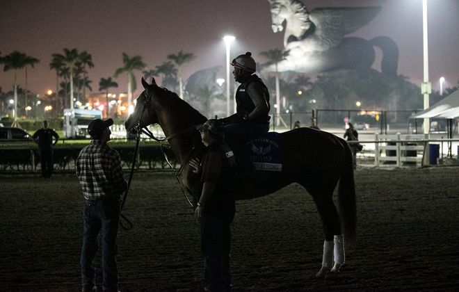 California Chrome heads off to the breeding shed after his loss in the Pegasus Photo Credit: Melanie Martines