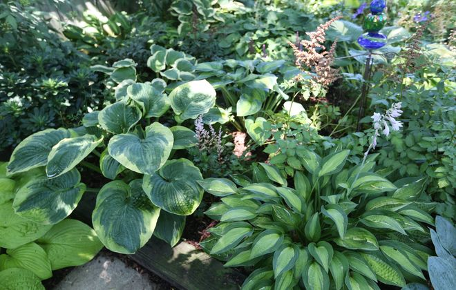 "Kathy Guest Shadrack will present ""Shady Characters: Common and Not So Common Plants for the Sun-Challenged Garden"" at the next meeting of the WNY Hosta Society. (Sharon Cantillon/Buffalo News file photo)"