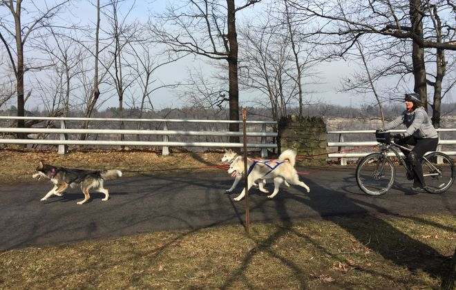 Dog sledding was a struggle during a warm Western New York winter, but Bekka Gunner and her huskies still found ways to train. (Emilee Lindner/Special to The News)