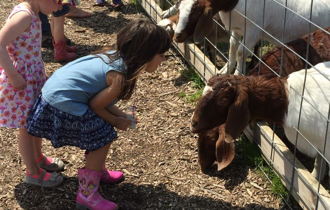 At Kelkenberg Farm of Clarence, the focus is on giving kids a fun and educational experience.  (Mary Friona-Celani/Special to The News)