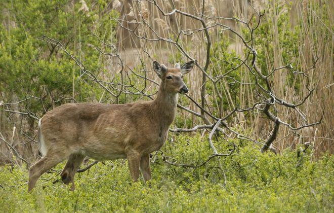 DEC announces deer, bear check stations