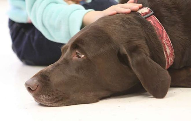 Gus the therapy dog provides an ear to young readers in Town of Tonawanda's Books and Barks