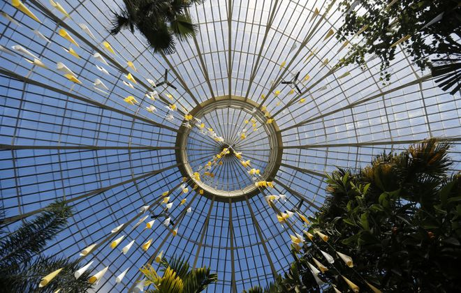 The beauty of Buffalo's botanical gardens are a steal at any price. (Mark Mulville/Buffalo News)