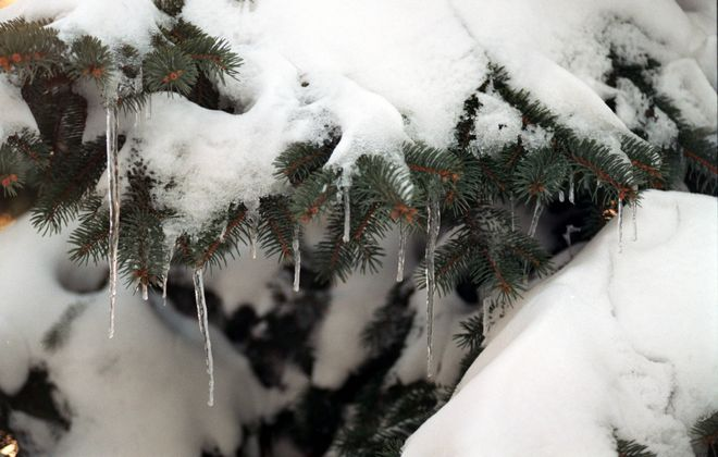 The recent deep freeze has gardeners and homeowners worried about their trees, shrubs and other plants. (Robert Kirkham/News file photo)