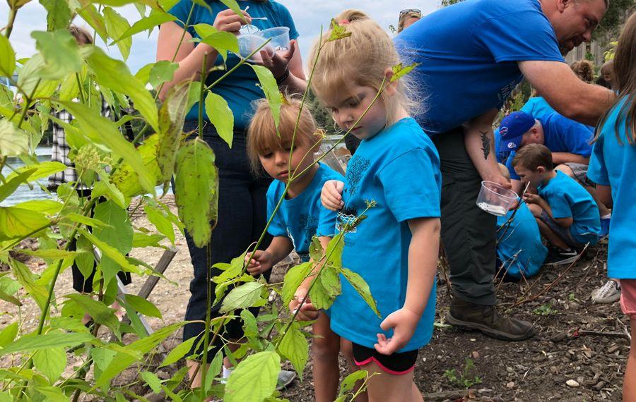 Four-year-olds Irene Stief and Emma Neuman from the Valley Community Center helped Buffalo Niagara Riverkeeper release pollinators Monday at the newly restored toe of the Katherine Street peninsula. (T.J. Pignataro/Buffalo News)