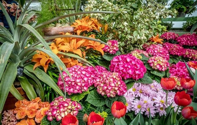 Spend a rainy day inside the Buffalo and Erie County Botanical Gardens where it's always a bright and cheerful day. (News file photo)