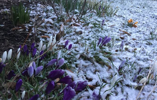 Snow is expected to arrive Friday. (News file photo)