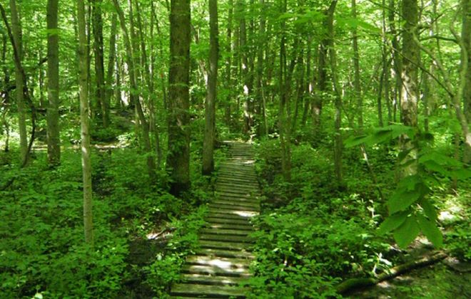 Hiker Heather Houskeeper shot this photo in Hunter's Creek Park in southeast Erie County during a hike several years ago of the entire 1,000-mile Finger Lakes hiking trail, which includes branches like the Conservation Trail that stretch through the park and into the Southern Tier and other parts of Western New York. (Photo courtesy of Heather Housekeeper)
