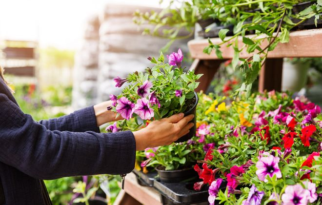 How to Pick the Best Plants for Your Garden