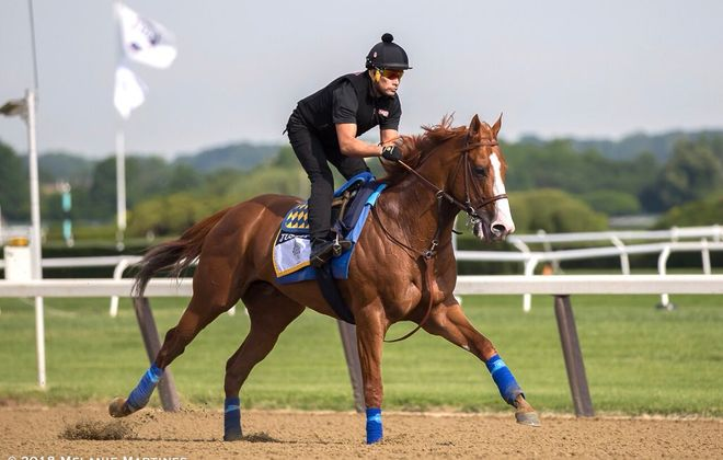 Justify gallops over the Belmont strip on Friday morning. Photo Credit: Melanie Martines
