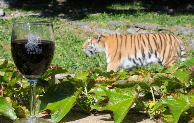 5 Reasons Not to Miss 'Wines in the Wild' at Buffalo Zoo