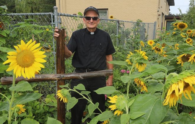 Rev. Ross Syracuse on the outside of his garden where sunflowers are growing. (John Hickey/Buffalo News)