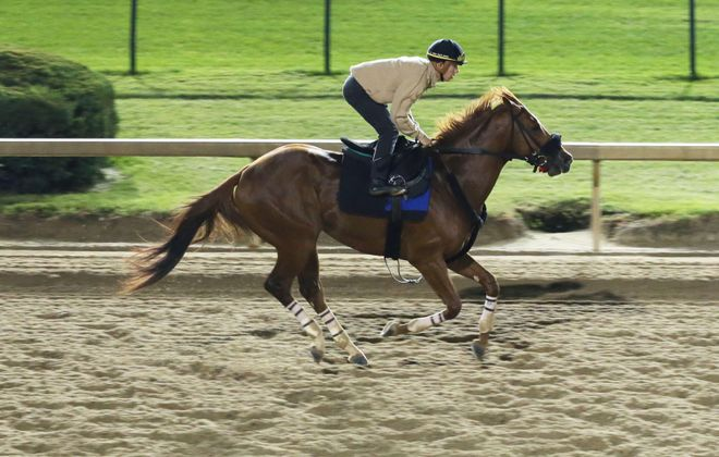 Mind Your Biscuits works over the Churchill Downs track preparing for Saturday's Lukas Classic. Photo Credit: Churchill Downs