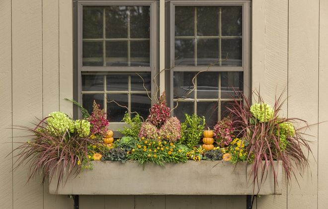 A window box is planted with 'Limelight' and 'Pinky Winky,' both panicle hydrangeas, along with 'Fireworks,' a variegated red fountain grass.  (Photo courtesy Proven Winners)