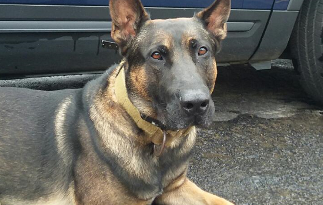 K-9 Wentz of the State Police. (New York State Police photo)
