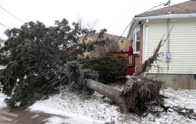 Glenice Guthrie looks at a tree that brought down a power line in the front of her home on Tillotson Place in the Town of Tonawanda on Monday after a windstorm swept through the area Sunday. (John Hickey/Buffalo News)