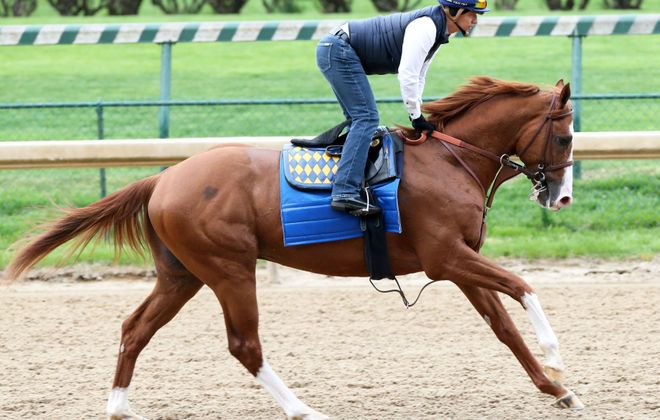 Improbable is your likely Preakness favorite next Saturday. Photo Credit: Coady Photo/Churchill Downs