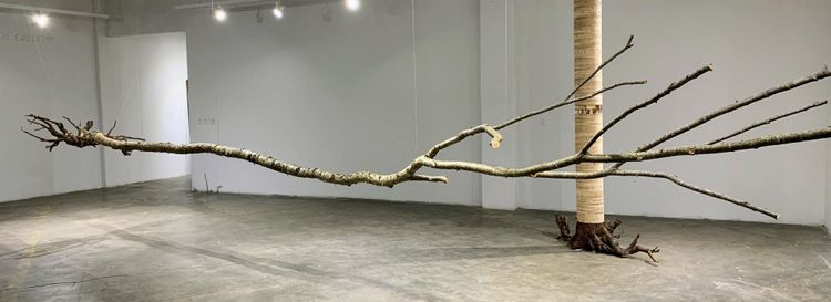 """The installation of Reinhard Reitzenstein's solo show, """"WTF (Where's the Forest?),"""" opening May 24 in the Buffalo Arts Studio."""