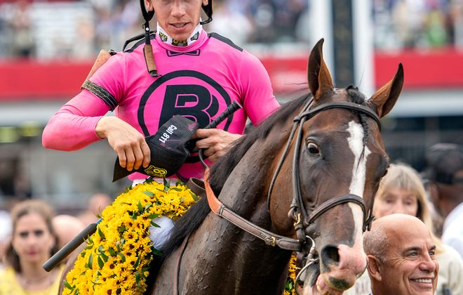 War of Will wears the winner's blanket of Black-eyed Susans after the Preakness Stakes. (Photo courtesy of the Maryland Jockey Club)