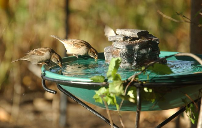 This week's Reader Challenge is bird baths. Please send in your photos. (Sharon Cantillon/News file photo)