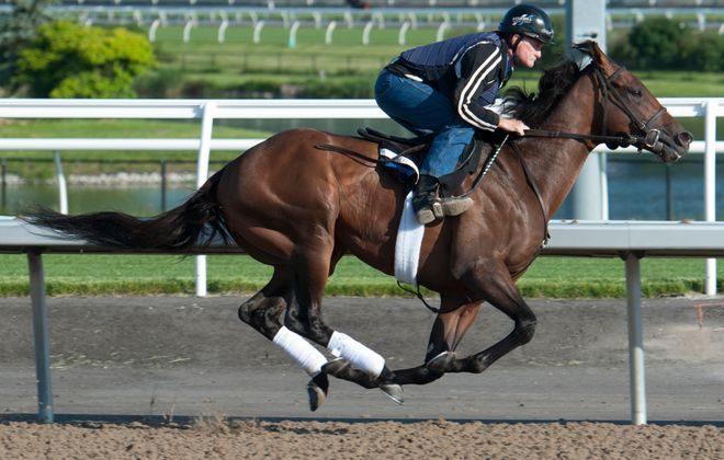 160th Queen's Plate Stakes favorite Avie's Flatter.  Photo Credit: Woodbine/ michael burns photo