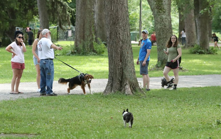 Dog-owners walk their pets at the Bark Park Picnic at Ellicott Island Bark Park in Tonawanda, on Sunday, Aug. 11, 2019.  (James P. McCoy/Buffalo News)