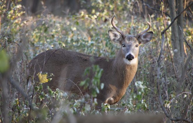 Hunting licenses are now on sale around the state. (Bill Hilts Jr./Buffalo News)