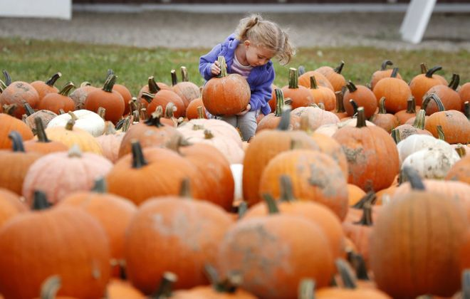 For many families, Pumpkinville in Great Valley is an annual fall tradition.   (Mark Mulville/News file photo)