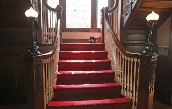 Tux keeps an eye on things from the staircase at the home of  Christine Burnett and David J. Hickok. (Robert Kirkham/Buffalo News)