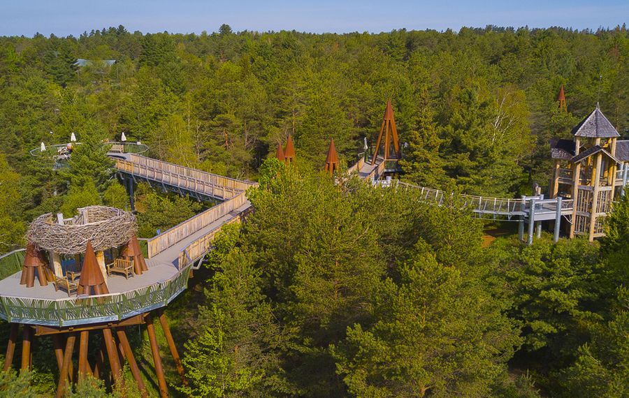 The Wild Walk starts at ground level and gently inclines to 40 feet so visitors can walk among the treetops. (The Wild Center)