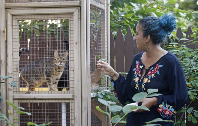 Johanna C. Dominguez's garden was on Garden Walk Buffalo this summer. The catio – an enclosed patio for her friendly felines – was just one highlight. (Robert Kirkham/Buffalo News)