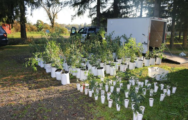 A large-scale marijuana growing operation in Busti was seized by law enforcement. (Photo via Chautauqua County Sheriff's Office)