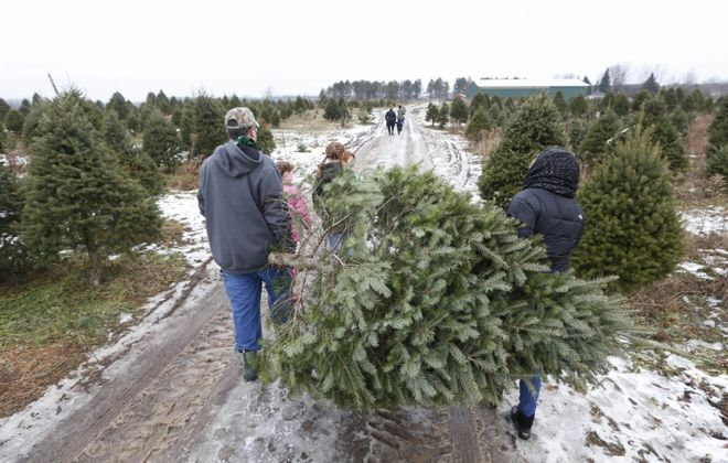 Cutting down your own Christmas tree at one of the many local tree farms can be a fun family activity but consider wearing eye protection while putting it up. (Sharon Cantillon/News file photo)