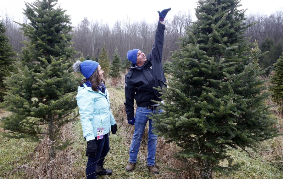 Zach Bidell of Cheektowaga and Christine Thulin estimate the height of their living room as they size up a tree prior to cutting at Roth's Hillside Tree Farm in Holland. (Robert Kirkham/Buffalo News)