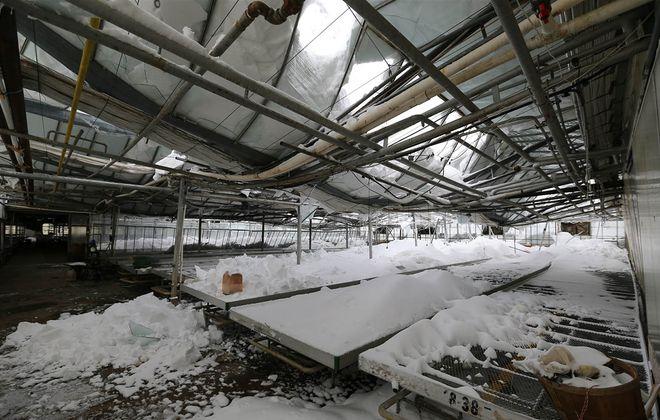 A greenhouse collapsed on the Zittel farm in Eden on Nov. 21, 2014. (Mark Mulville/Buffalo News)