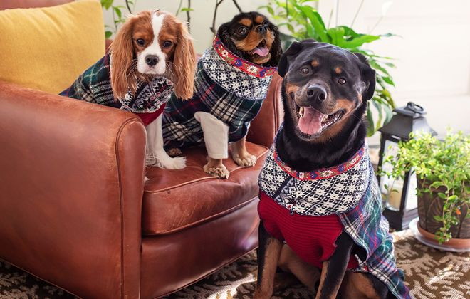 Kristen Horn's own pups love her Dognanny Originals handmade sweaters. (Kristen Rice Photography)