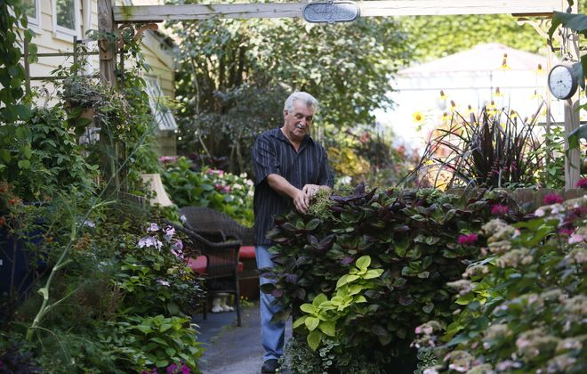 Joe Hopkins works in his 16th Street garden as he prepares for this weekend's  Garden Walk Buffalo.  The free, self-guided event takes place from 10 a.m. to 4 p.m. Saturday and Sunday.